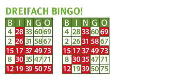 bingo los kosten